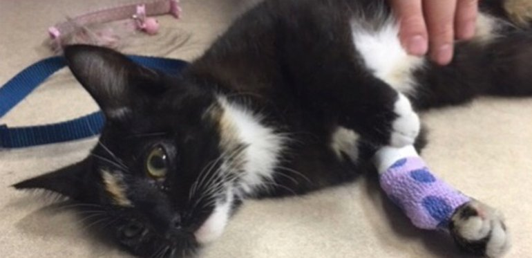 The kitten, seen in a photo released by police, is recovering.