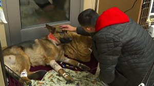 The teen pets his beloved dog Rex, who is recovering after being beaten and shot during a home-invasion in Des Moines, Washington, on Feb. 21, 2018. (Credit: KCPQ)