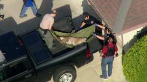 Authorities captured the big cat after containing the mountain lion in a cul-de-sac in Azusa on March 26, 2018. (Credit: KTLA)