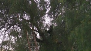 A firefighter climbs a tree in an attempt to get a woman down more than 10 hours after she climbed up on May 15, 2018. (Credit: KTLA)