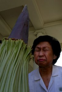 "Connie Louie smells the Amorphophallus titanum — ""corpse flower"" — at the Huntington Library gardens in August 2002. (Credit: Francine Orr / Los Angeles Times)"