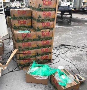 Cocaine was found hidden amid bananas sent to a Texas prison on Sept. 21, 2018. (Credit: Texas Department of Criminal Justice)