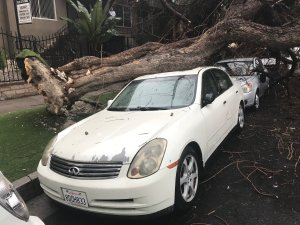 by a tree in Hollywood on Oct. 13, 2018, after a storm swept through the area the night before. (Credit: Drew Kocak)