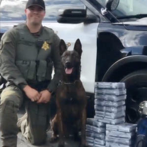 Orange County Sheriff's Department patrol and narcotics K-9 Arco died suddenly on Jan. 12, 2019. (Credit: OCSD)