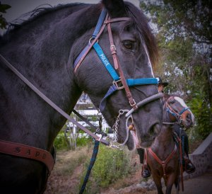 Bonita, a horse from the Santa Ana Police Department Mounted Unit, died suddenly on Jan. 4, 2019. (Credit: Santa Ana Police Department)