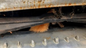 Riverside County Animal Services released this photo of the trapped cat.
