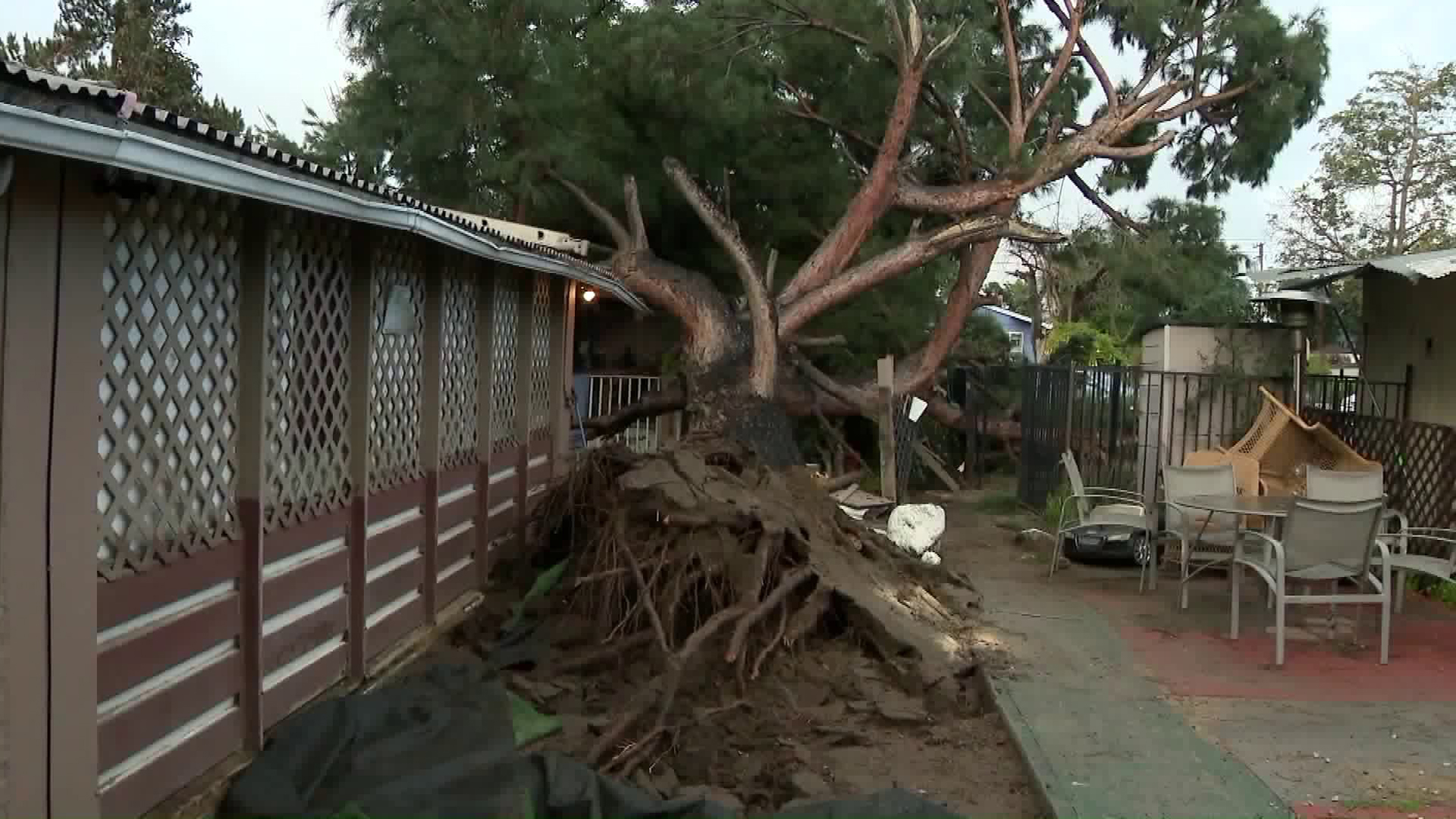 A tree that toppled onto a home in Pomona is seen on Feb. 21, 2019. (Credit: KTLA)