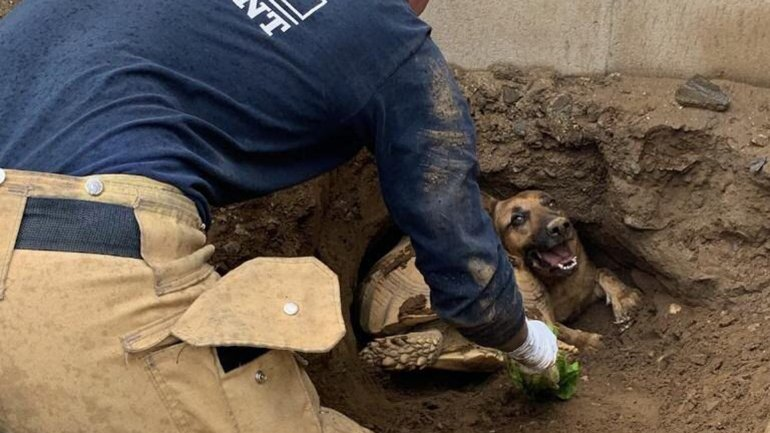 Firefighters work to rescue a tortoise and a German shepherd dog that became trapped in a hole in Fontana on Feb. 20, 2019. (Credit: San Bernardino Sheriff's Department)