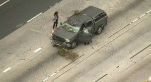 A vehicle is damaged after a tree fell on an onramp of the 405 Freeway in Sherman Oaks on Feb. 21, 2019. (Credit: KTLA)
