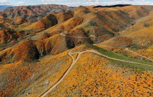 "An aerial view of a ""super bloom"" of wild poppies blanketing the hills of Walker Canyon on March 12, 2019 near Lake Elsinore. (Credit: Mario Tama/Getty Images)"