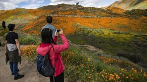 Visitors take photos of the super bloom of poppies in Lake Elsinore's Walker Canyon. (Credit: Gina Ferazzi / Los Angeles Times)