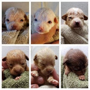 Six of the seven puppies that were dumped in a Coachella dumpster are seen in undated photos provided by the Riverside County Department of Animal Services on April 29, 2019.