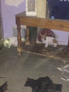 A photo of two of the dogs found in Culwell's home was released by Animal Services on April 23, 2019.