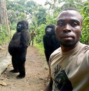 Ndakazi and Ndeze pose with a park ranger at Virunga National Park in the Democratic Republic of Congo. (Credit: Virunga National Park/Instagram)