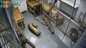 Tiger pens at the Topeka Zoo. The pens house two adult tigers and two cubs. (Credit: CNN)