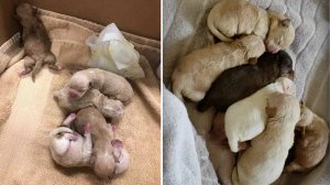 The puppies tossed into a dumpster in Coachella are seen right after their rescue on April 19, 2019, (left) and in a photo provided by volunteer caring for them three days later (right.) (Credit: Riverside County Department of Animal Services.)
