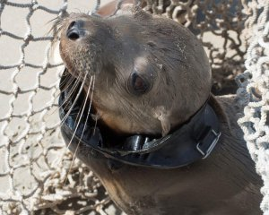 SeaWorld San Diego released another photo of the wounded sea lion pup on May 28, 2019.
