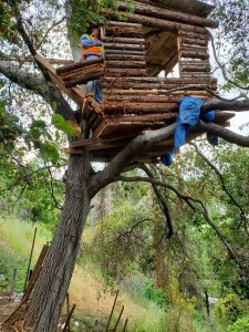 Police arrested an alleged burglar after he was found living in an elaborate tree house in Ganesha Hills in Pomona on May 21, 2019. (Credit: Pomona Police Department)