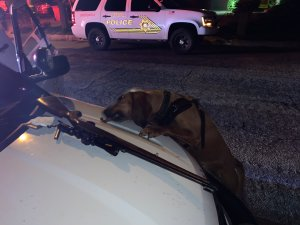 Yucaipa police released this photo of K-9 Dare after the bloodhound helped track down a suspect on June 26, 2019.