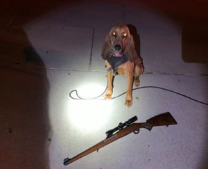 K-9 Dare tracked down the suspect after acquiring his scent. (Credit: Yucaipa Police Department)