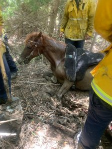 Firefighters rescue a horse at the Hansen Dam Recreation Area on Aug. 17, 2019. (Credit: Los Angeles Fire Department)