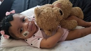 After being taken off life support, Phoenix breathes with the help of a nasal cannula that provides supplemental oxygen. (Credit: Monique Goldring)