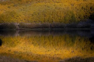 Yellow aspen leaves are reflected in North Lake, in in Inyo National Forest west of Bishop, on Oct. 6, 2019. (Credit: Francine Orr / Los Angeles Times)