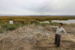 Tom Anderson, a biologist with the U.S. Fish and Wildlife Service, surveys acres of exposed lake bed that have become marshlands at the Salton Sea.(Credit: Irfan Khan / Los Angeles Times)