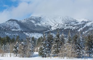 Part of the stock of evergreen trees available to be chopped down at Mammoth Lakes is seen in a file photo. (Credit: Dakota Snider/Mammoth Lakes Tourism)