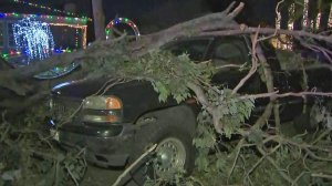 A tree landed on top of two vehicles in Santa Ana on Dec. 31, 2019. (Credit: KTLA)
