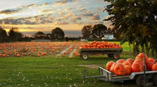 my-kids-pumpkin-patch