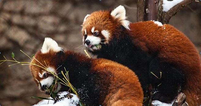pandas1