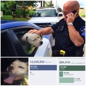 Officer Carter Pit Bull