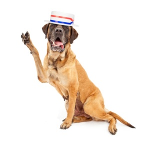 Dog Vote Election