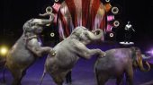 Carol the elephant performing at a Ringling Bros. and Barnum & Bailey Circus show