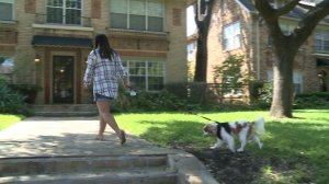 Nina Pham out walking Bentley