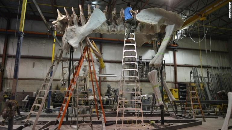 titanosaur1