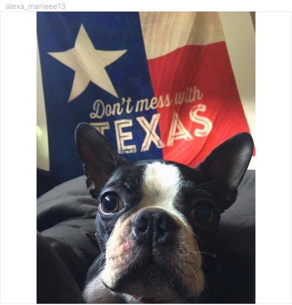 texas dog