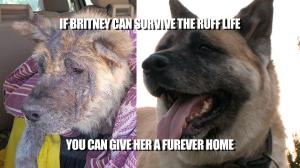 britney-meme-2