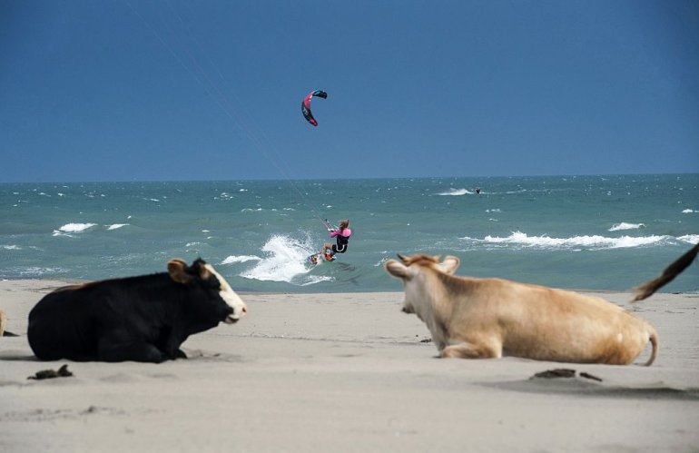 A kitesurfer sails on a downwind run on the waves of Mediterranean Sea as the cows stand on the shore of the sea near the town of Ulcinj on May 19, 2015. AFP PHOTO/ARMEND NIMANI (Photo credit should read ARMEND NIMANI/AFP/Getty Images)